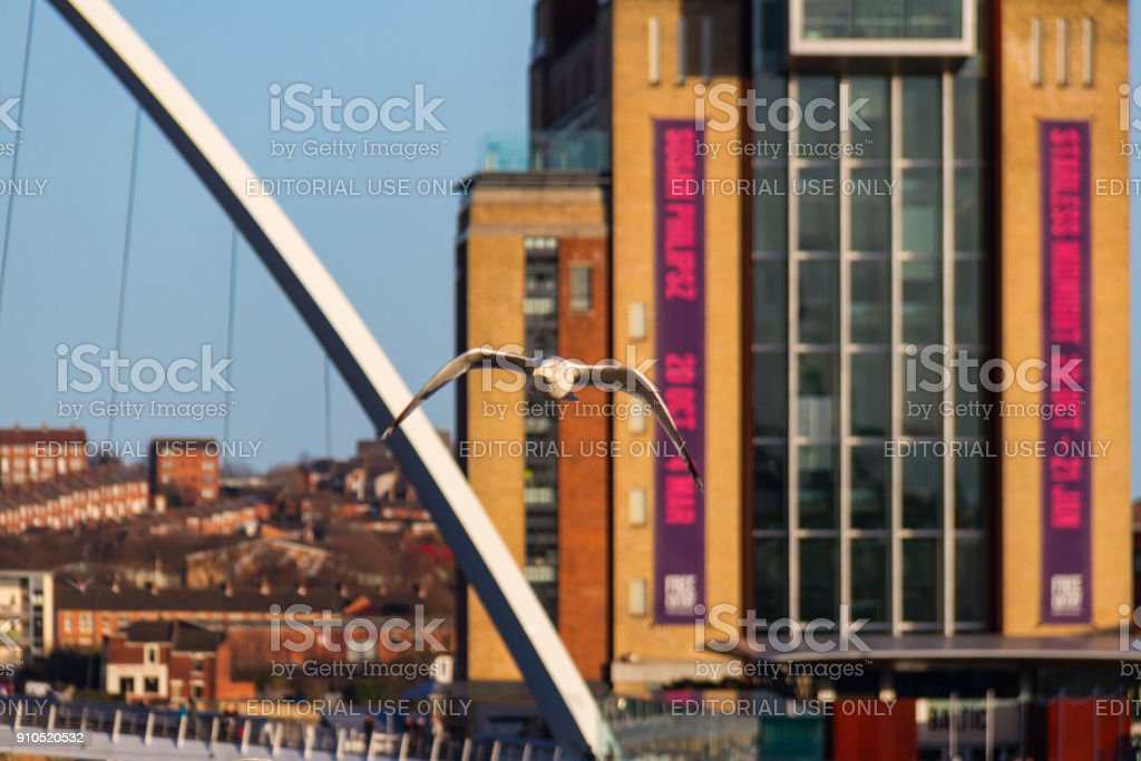 Seagull flying over river Tyne in Newcastle Quayside stock photo