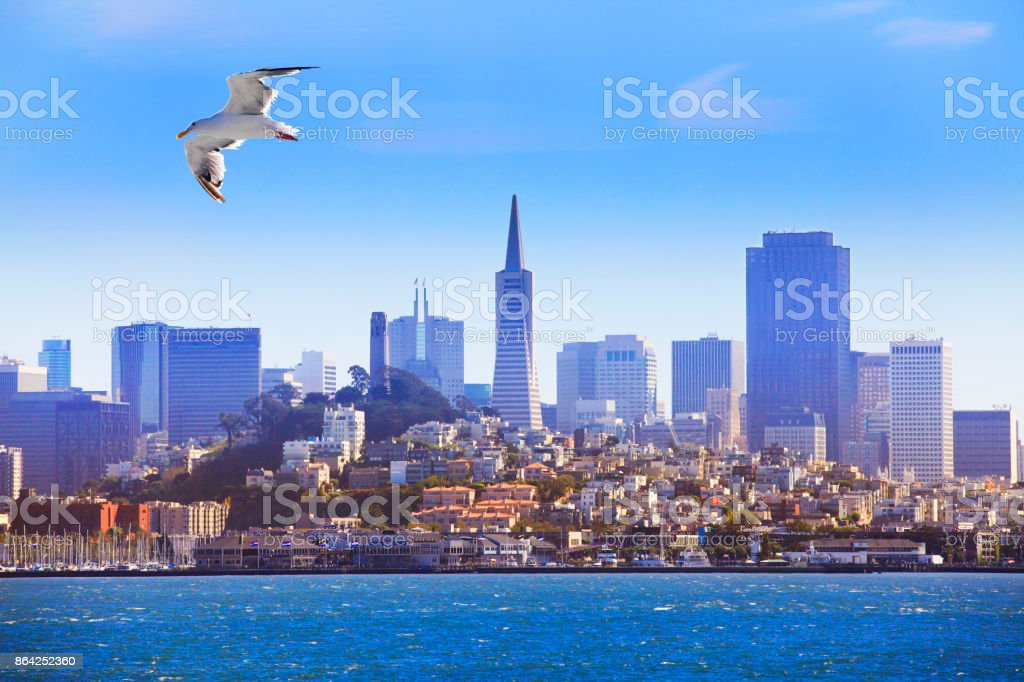 Seagull flying over the bay on the background of San Francisco royalty-free stock photo