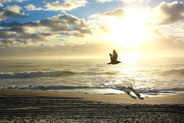 Seagull flying over the Beach at Sunrise stock photo