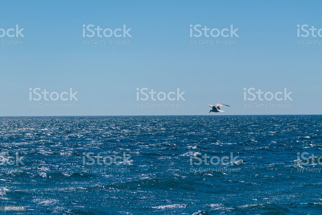 Seagull flying over the horizon royalty-free stock photo