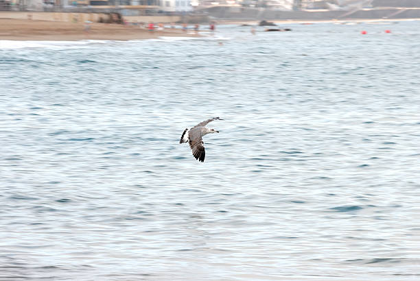 Seagull flying over the sea in a beach stock photo