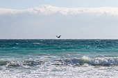 Seagull flying over windy sea