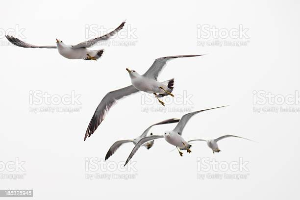 Photo of Seagull flying