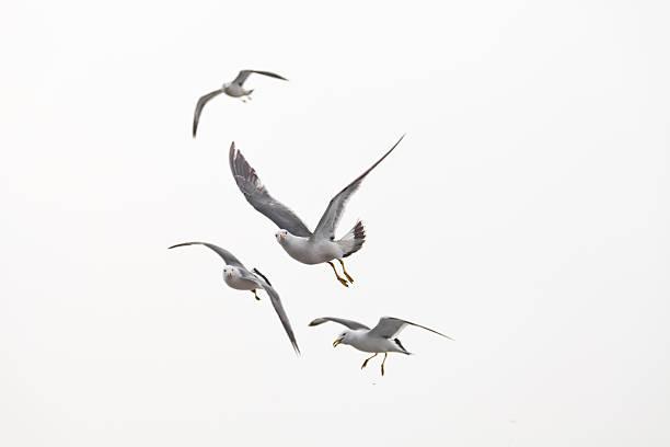 Möwe Fliegen – Foto