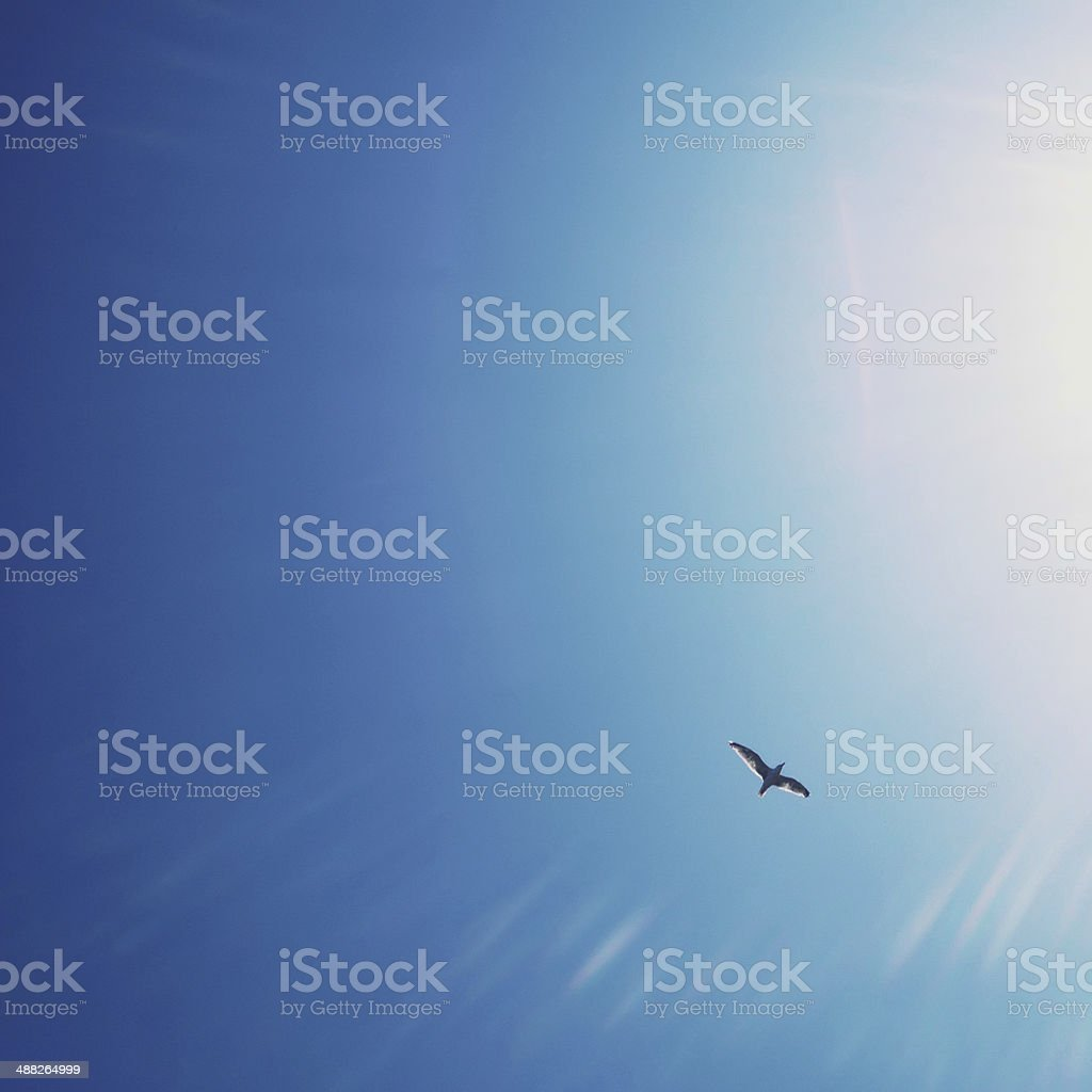 Seagull flying to the sun stock photo