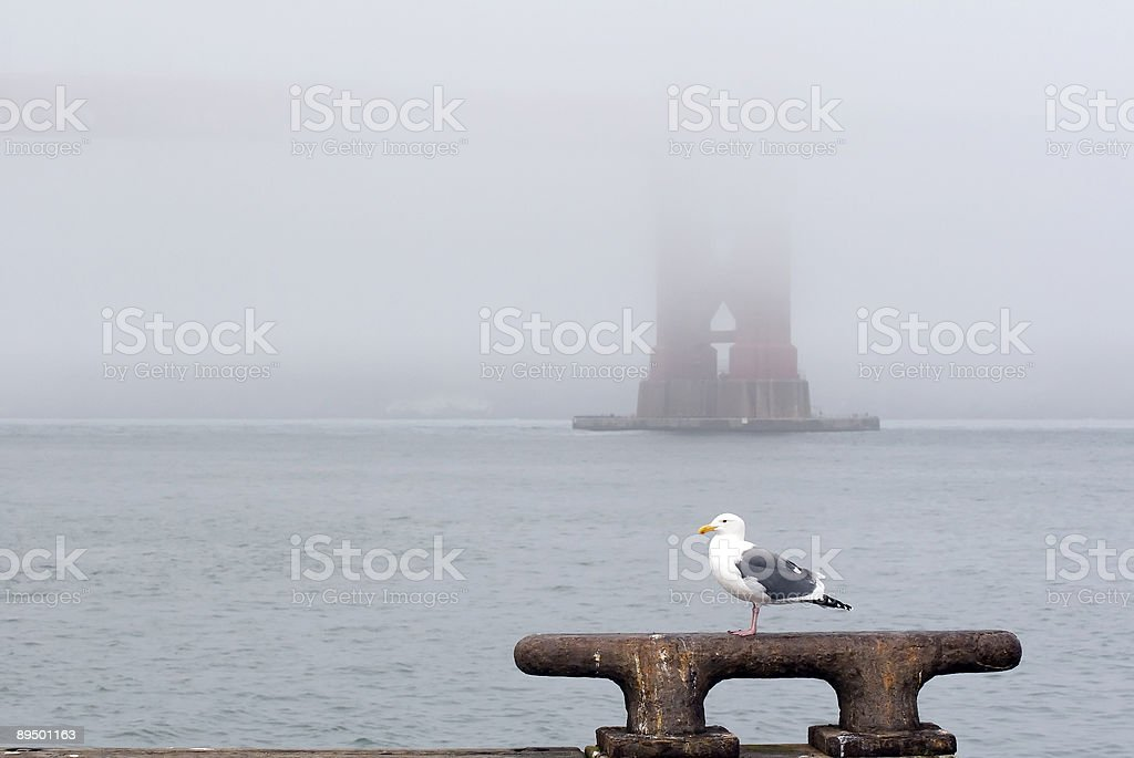 Seagull Fog royalty-free stock photo