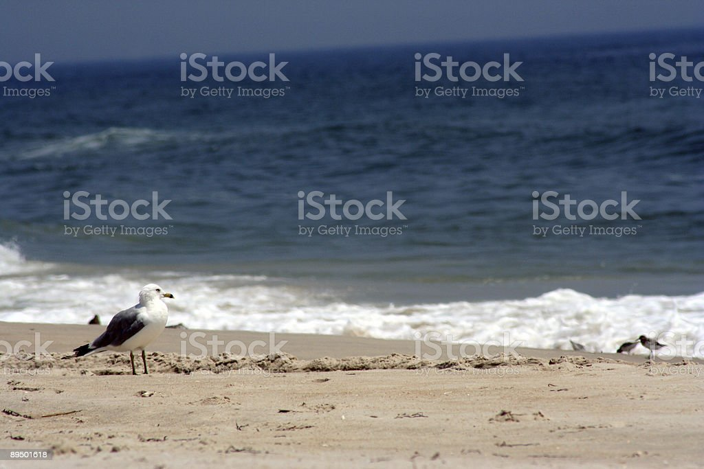 Seagull guarding the beach stock photo