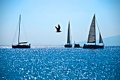 Seagull in Flight between two sails