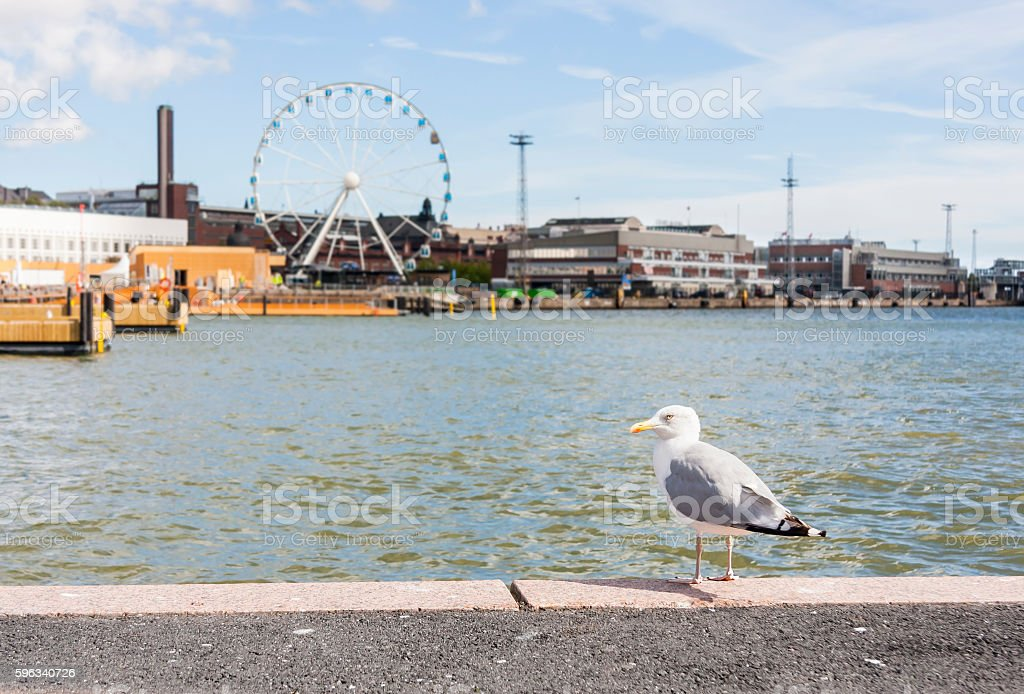 Seagull in front of cityscape of Helsinki, Finland royalty-free stock photo