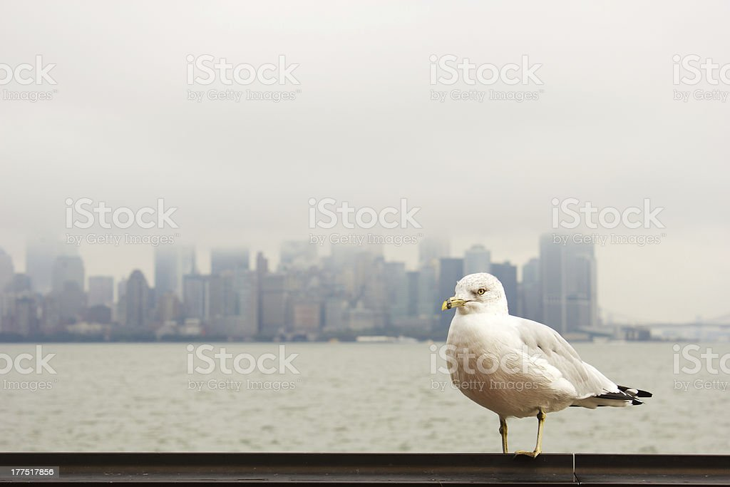 Seagull in front of Manhattan royalty-free stock photo