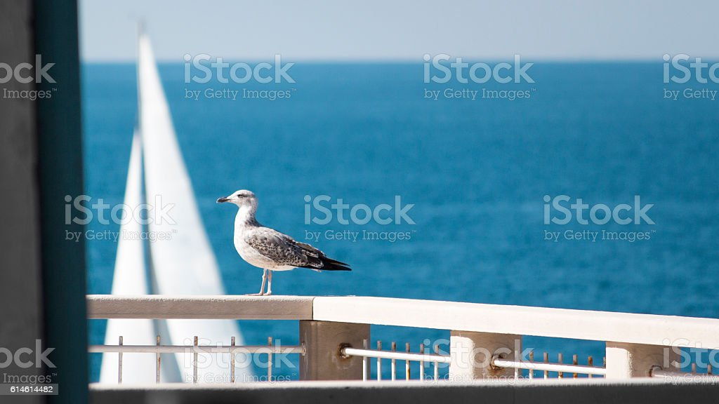 Seagull in front of the sailboat stock photo