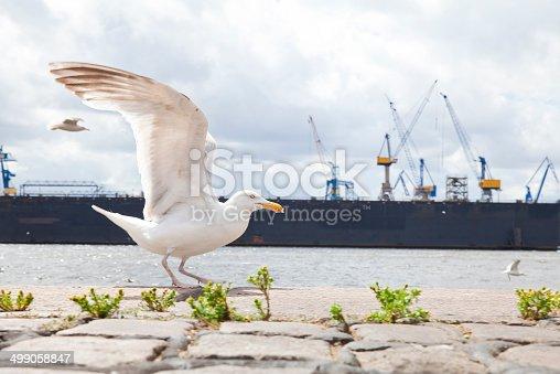 istock Seagull in Hamburg 499058847