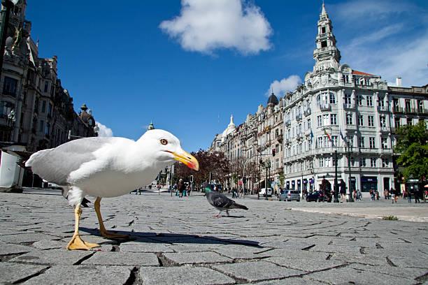 Seagull in Oporto stock photo