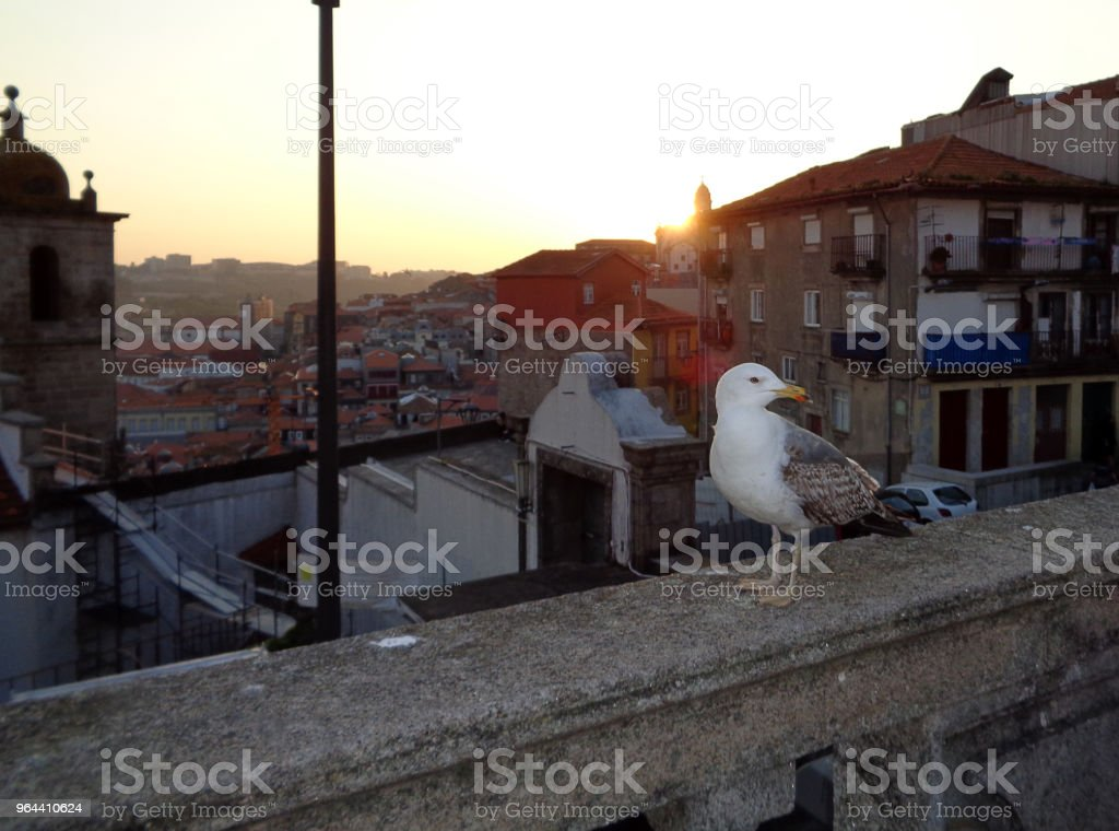 Seagull in Porto - Royalty-free Aerial View Stock Photo