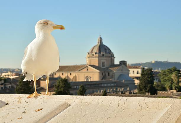 Seagull in Roman view stock photo