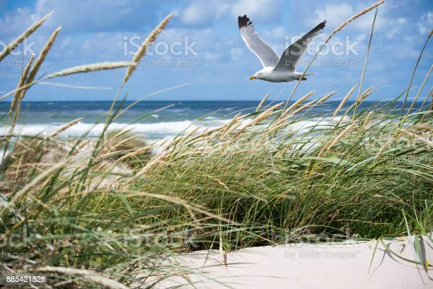 Photo of Seagull in the Dunes