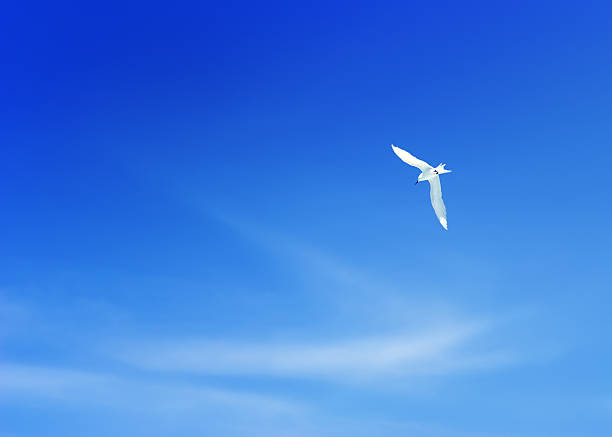 Seagull in the sky. stock photo