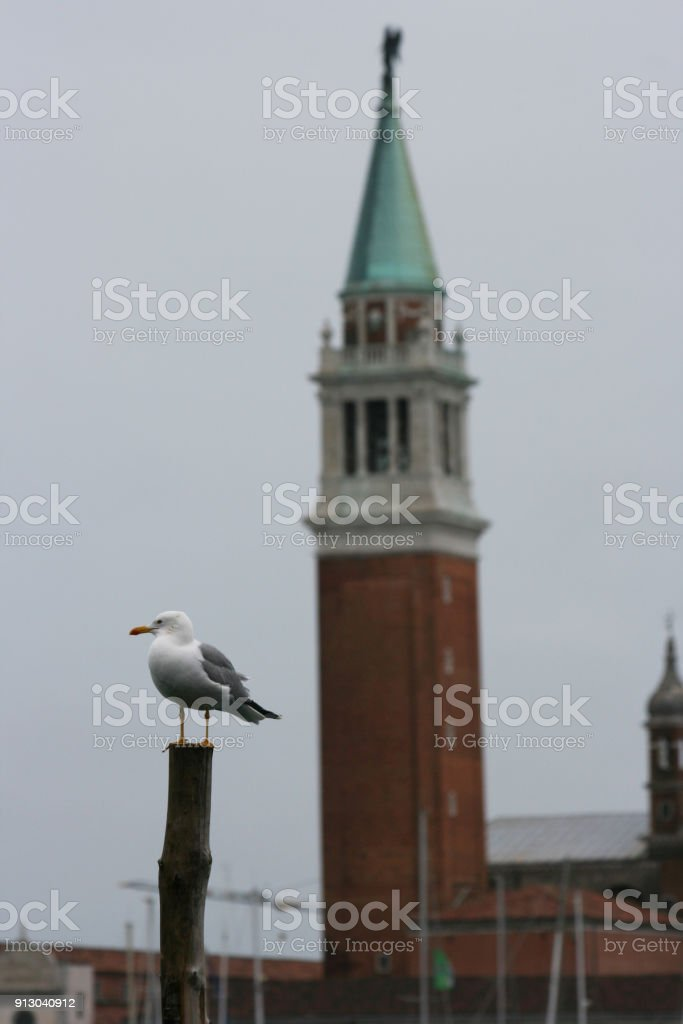 seagull in Venice (winter season) stock photo