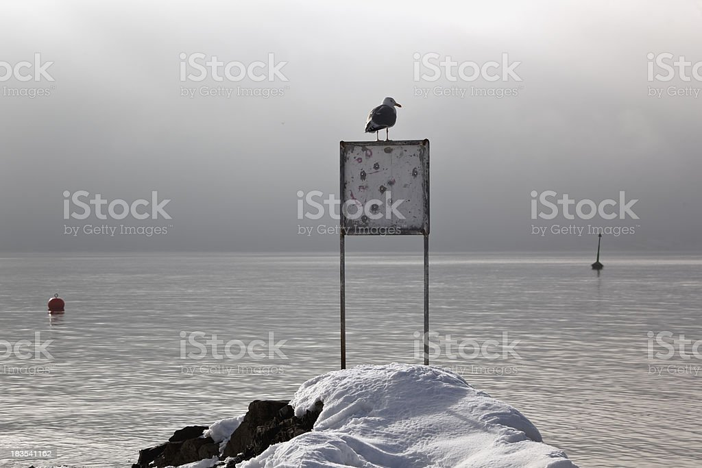 Seagull in winter. royalty-free stock photo