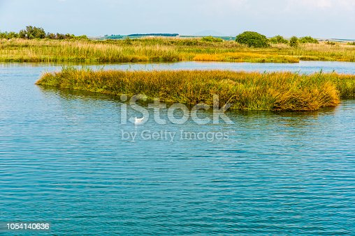 Seagull is swimming front reeds in Greece