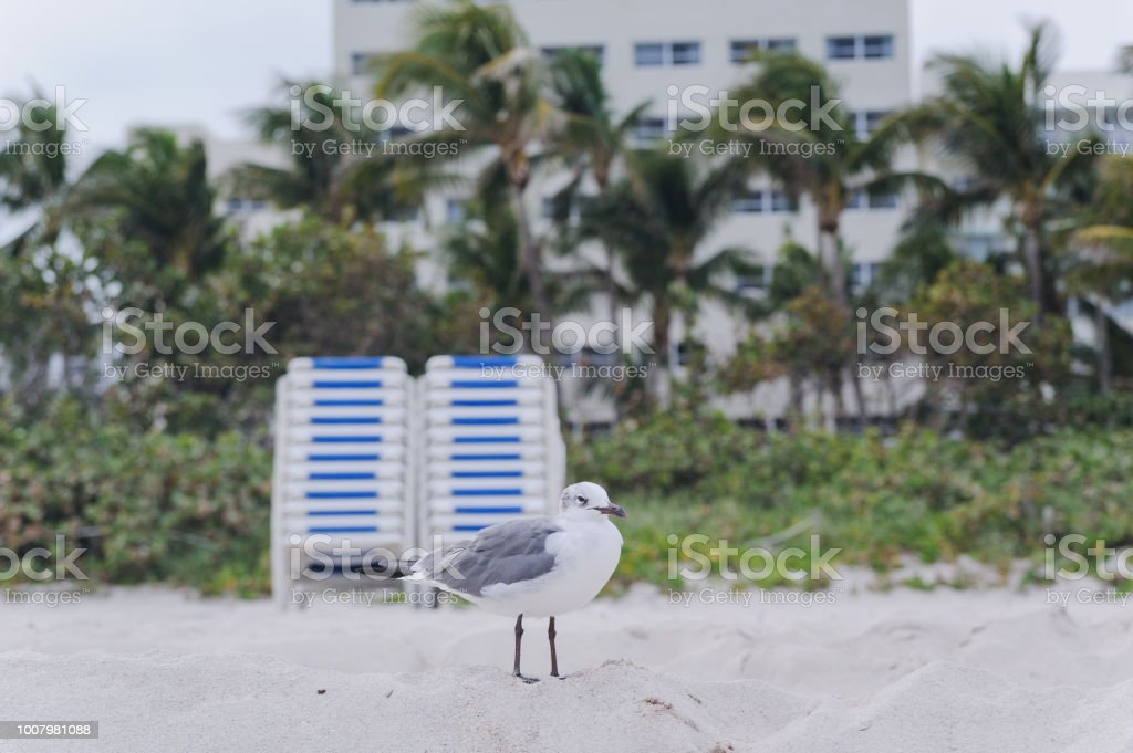 Seagull is walking on the tropical beach with deck chair on the background stock photo