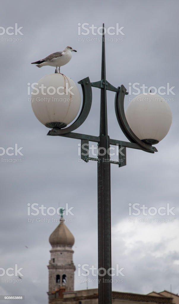 seagull, krk stock photo