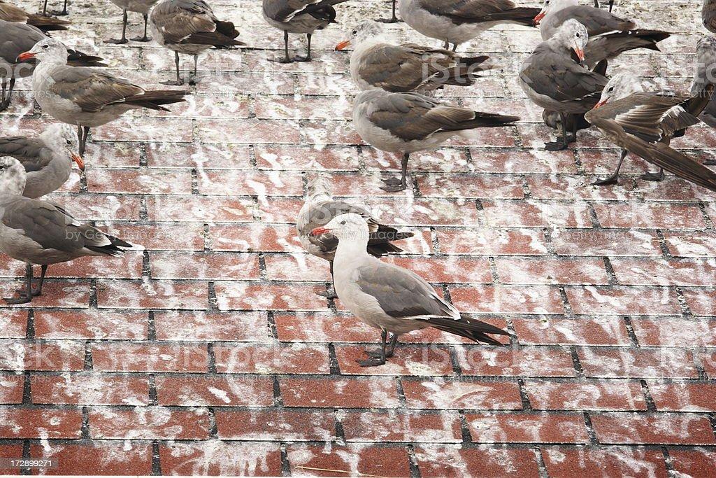 Seagull Laridae Guano Bird Flock stock photo