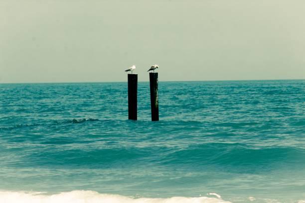 Seagull Life stock photo