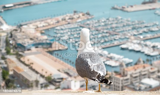 istock Seagull looking over blurred sea and harbor of Alicante town in Spain. Urban scene with wild bird 1324674379