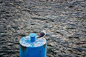 Seagull of the baltic sea