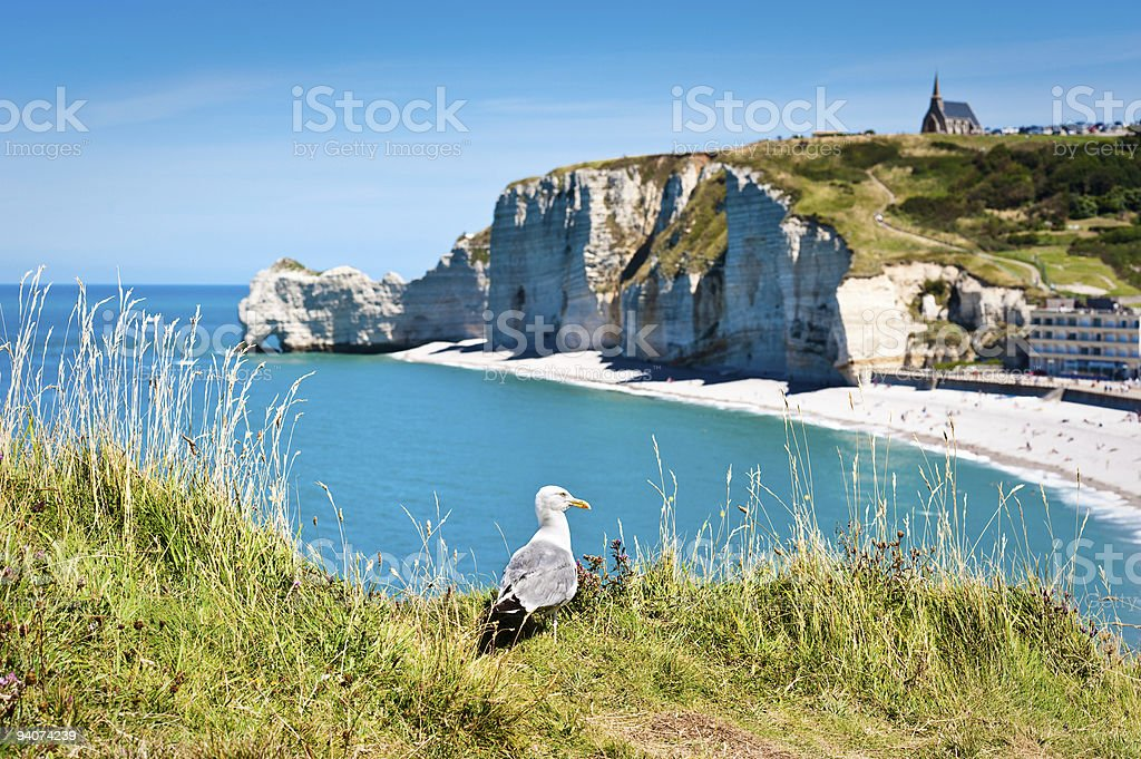 Seagull on a beach overlooking calm blue water stock photo