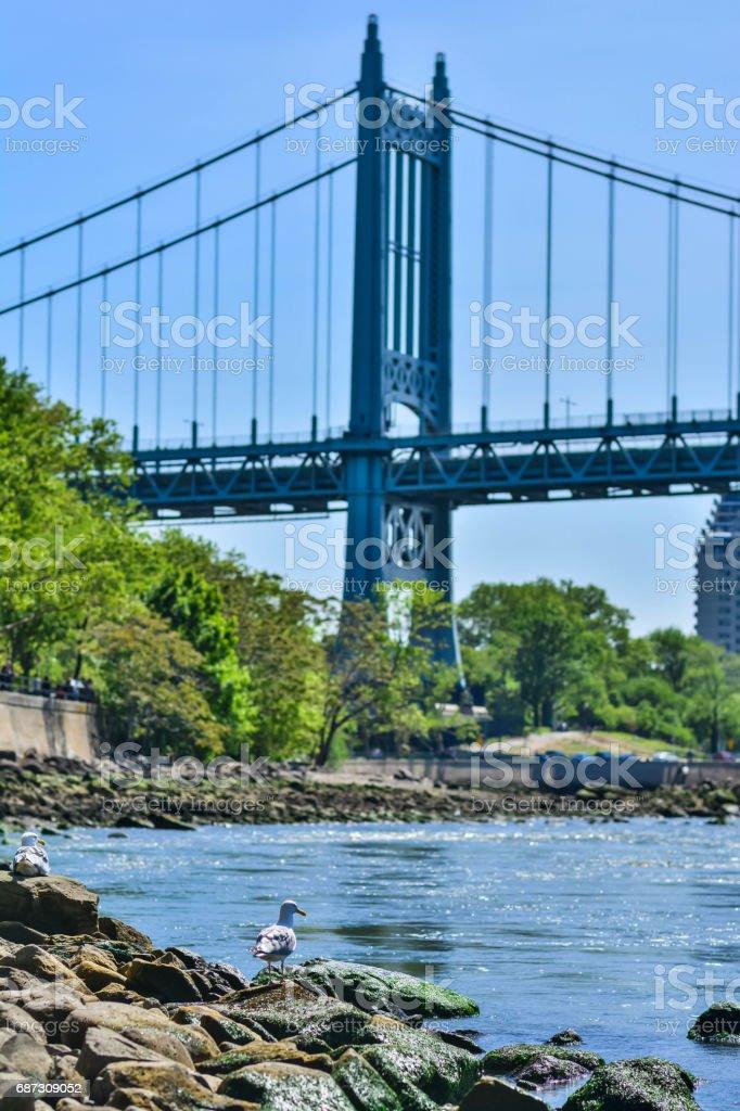 Seagull on a bridge background stock photo