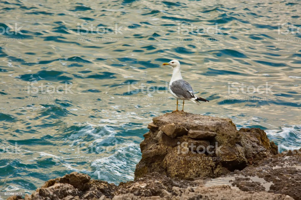Seagull on a cliff by the clear blue sea, summertime outdoor theme stock photo