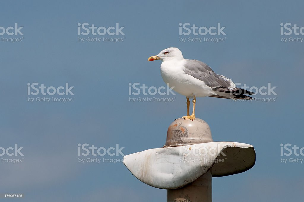 Seagull on a lamppost stock photo