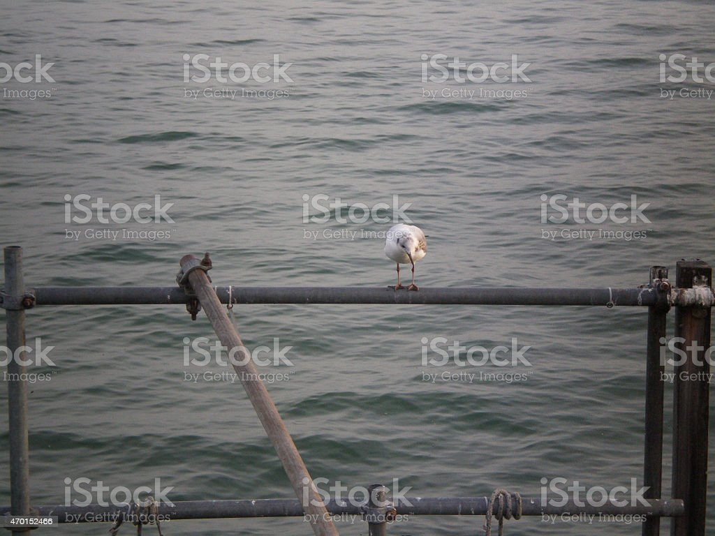 Seagull on a little jetty stock photo