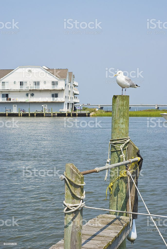 Seagull on a Piling royalty-free stock photo