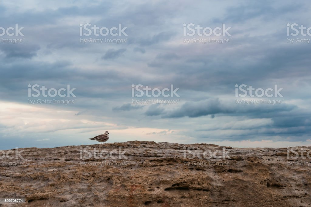 Seagull on a rock by sea stock photo