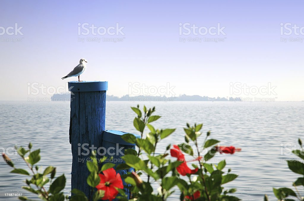 Seagull on a wooden bollard royalty-free stock photo