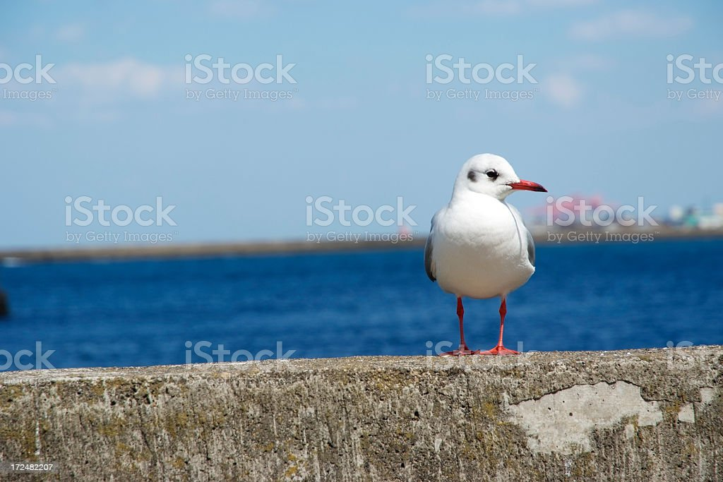 Seagull on breakwater against blue sea royalty-free stock photo