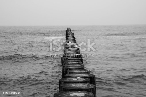 Seagull on a Wooden Breakwaters at a seaside