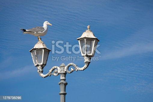 istock Seagull on lamp post 1279735295