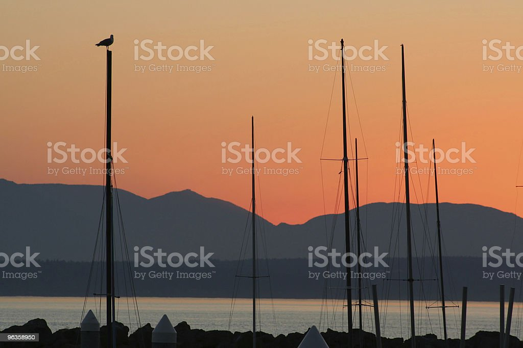 seagull on mast watches sunset stock photo