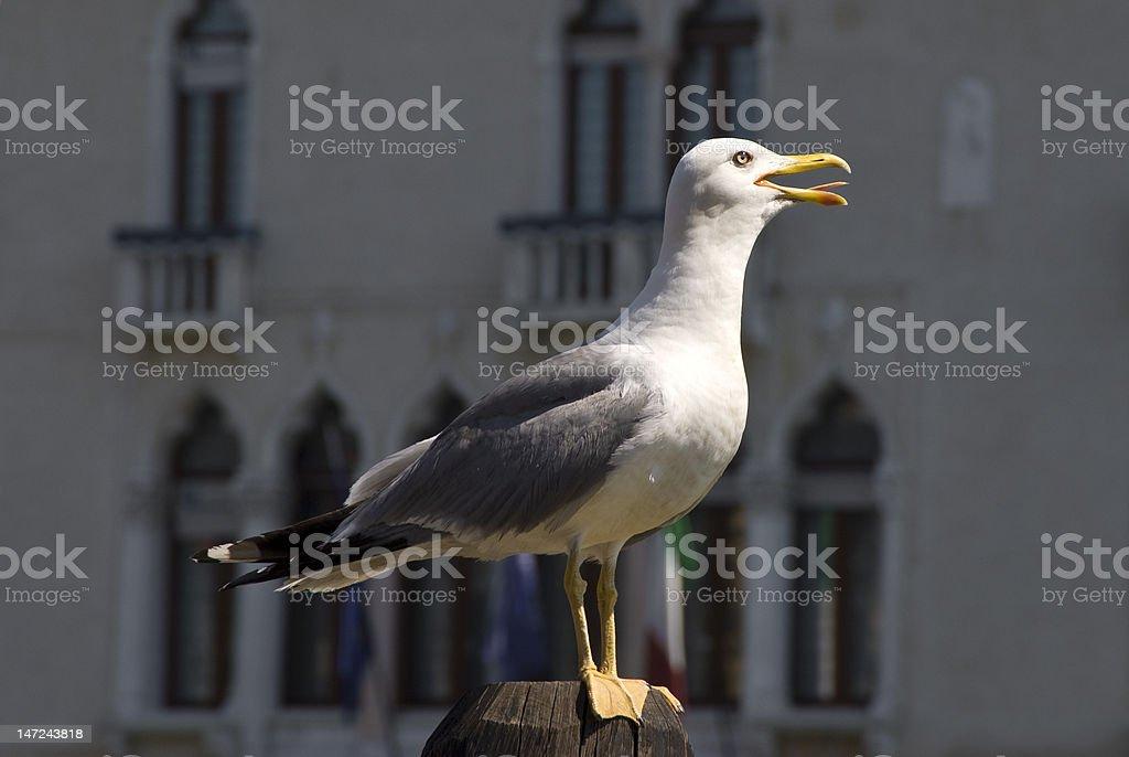 Seagull on pole stock photo
