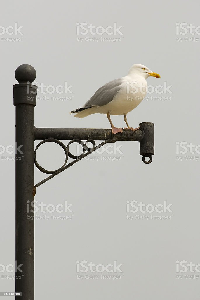 seagull on post royalty-free stock photo