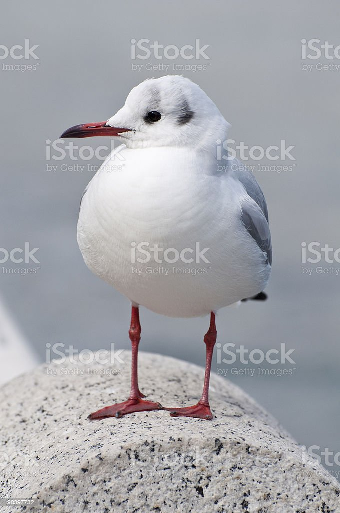 Seagull on stone pillar royalty-free stock photo