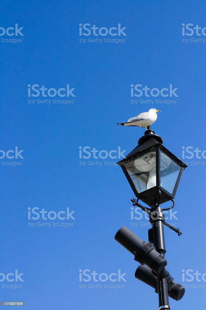 Seagull on street lamp stock photo