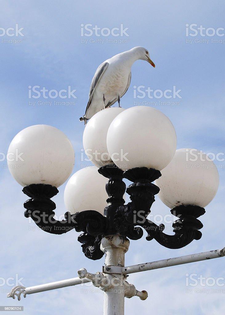 Seagull on streetlight royalty-free stock photo
