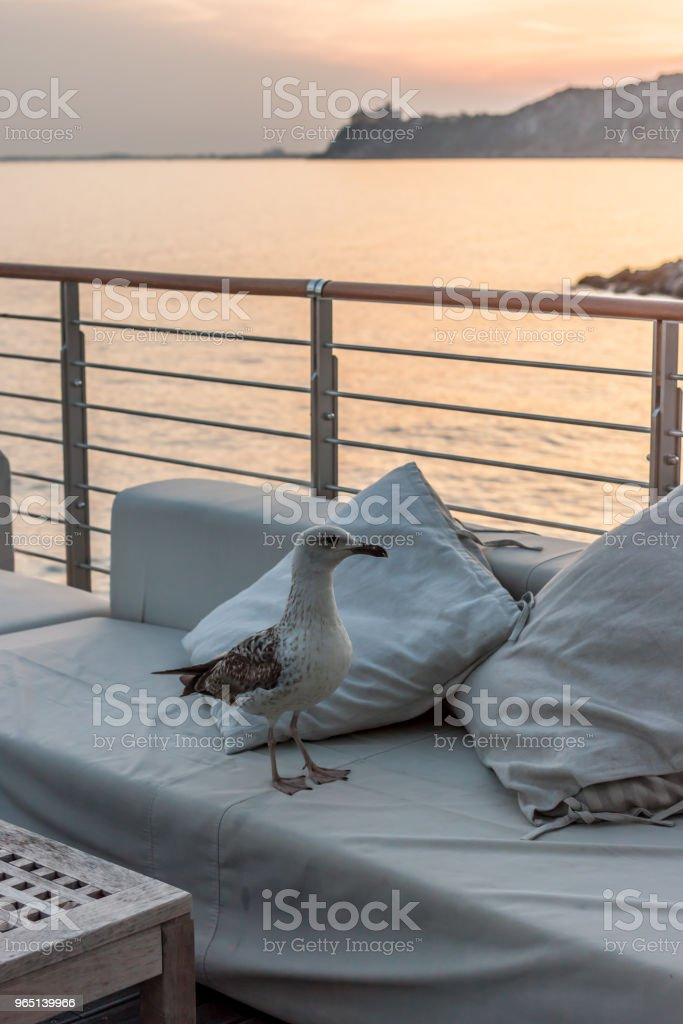 seagull on terrace watching sunset zbiór zdjęć royalty-free