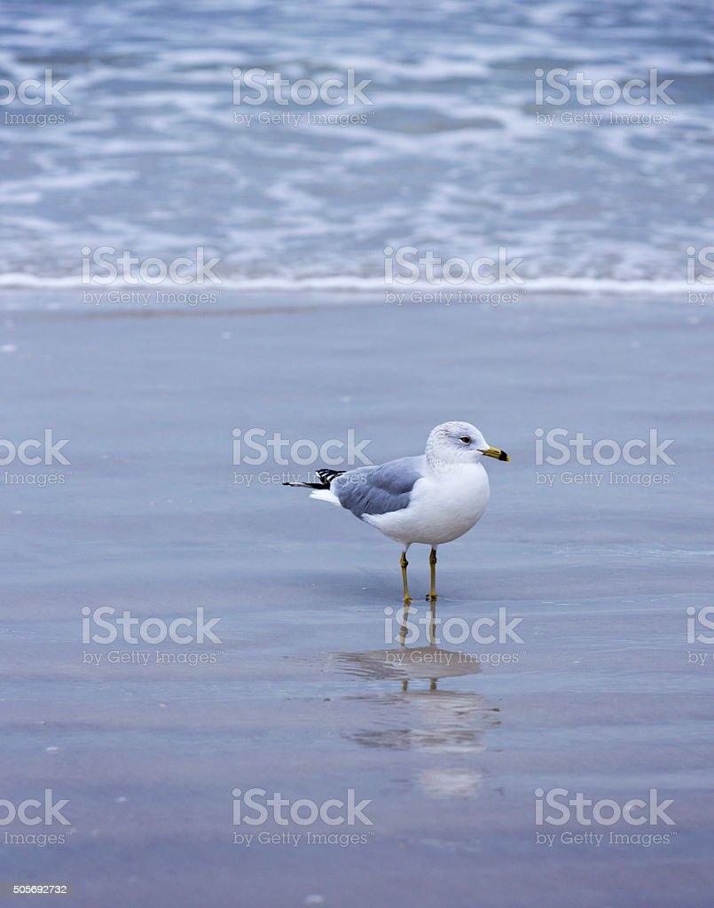 Seagull on the Beach stock photo