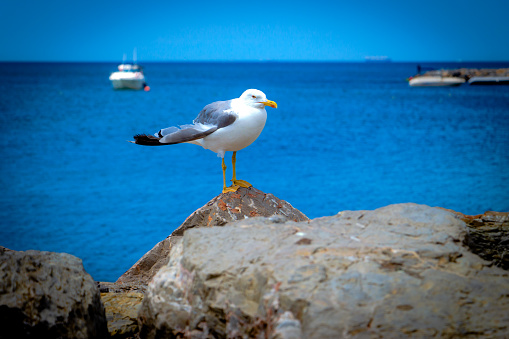 A seagull on the rock near the sea